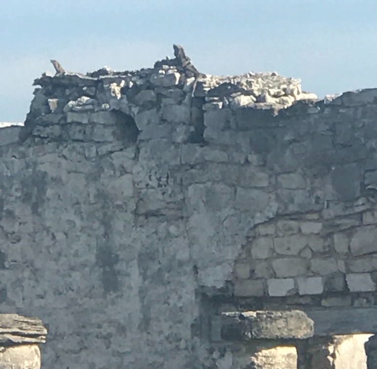 ancient iguanas
